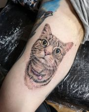 Cat portrait tattoo in colour